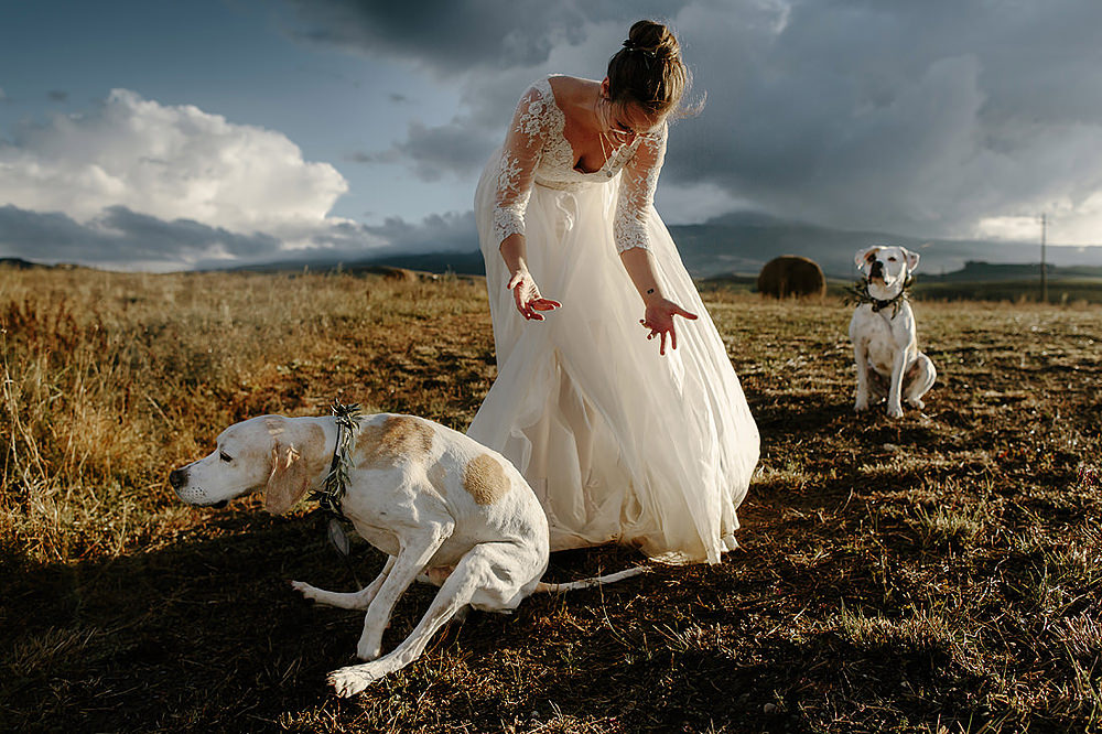 Melbourne city elopement with dogs