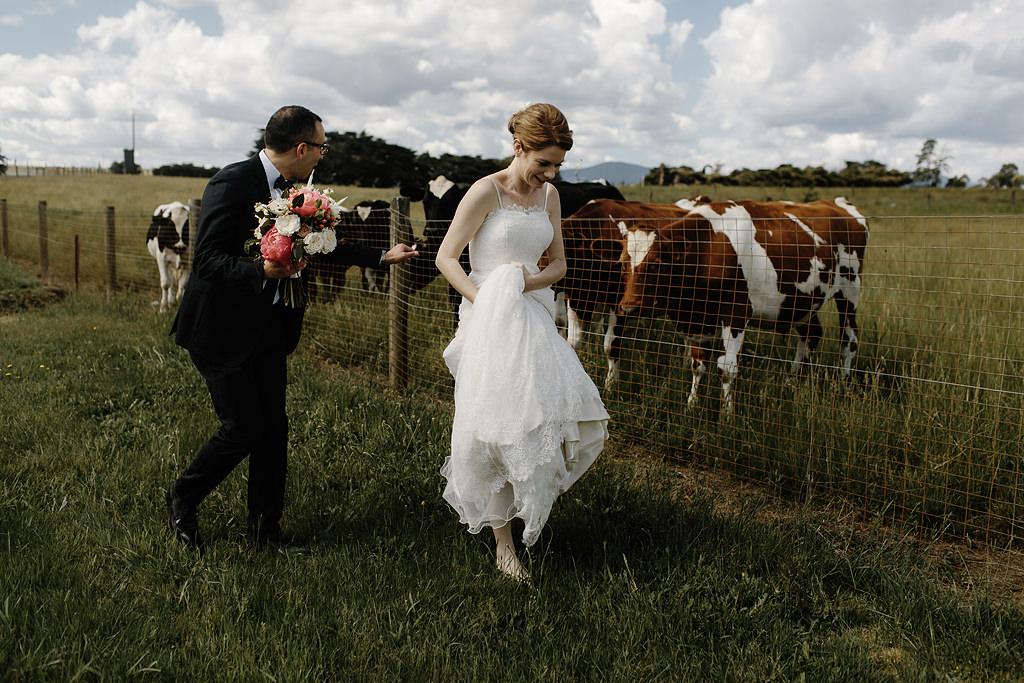 zonzo cows