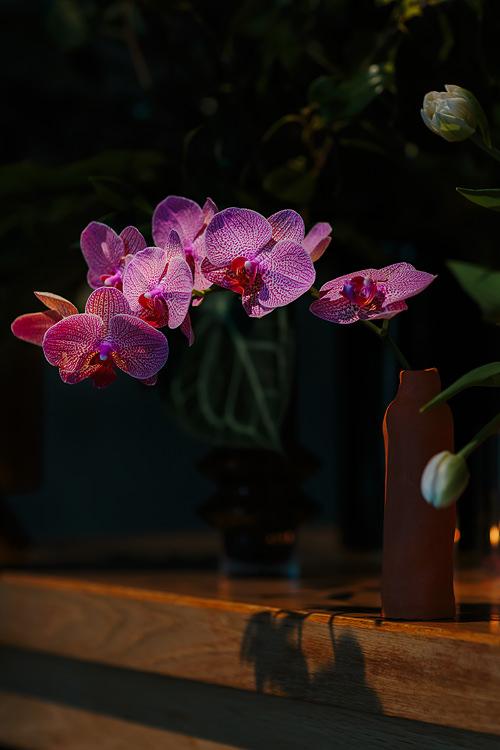flos botanical