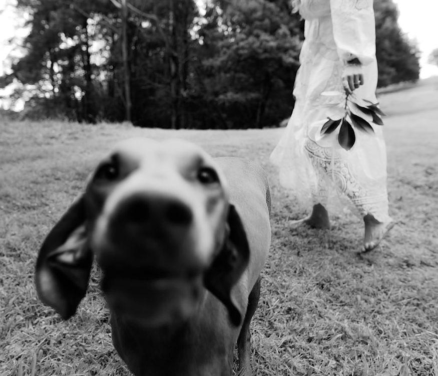 Top 10 Melbourne Wedding Photographers